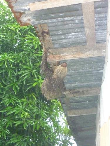 Rio Pacuare, Costa Rica