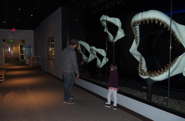 Deux musées : art et histoire naturelle.